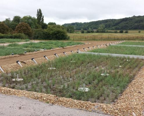 Station épuration filtres plantés dans la commune de BUXEUIL