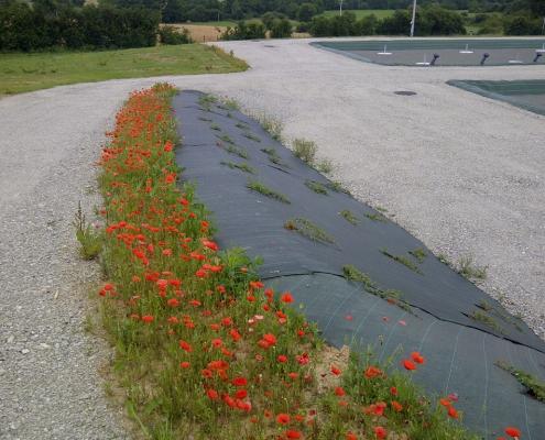 Station épuration filtres plantés dans la commune de BALLÉE