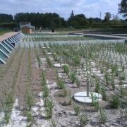Station épuration filtres plantés dans la commune de LAMNAY