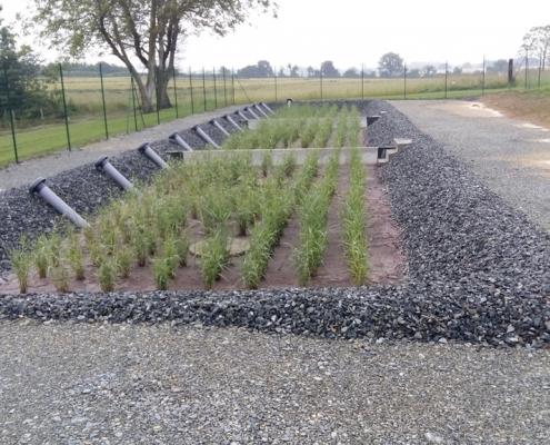 Station épuration filtres plantés dans la commune de SAINT-MICHEL-DE-FEINS